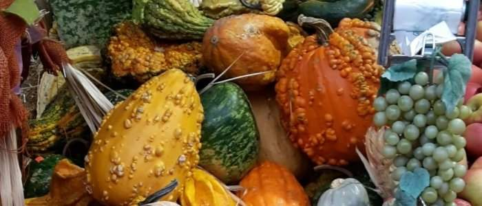 AnyCook : Pumpkin Party