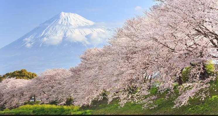 AnyCook : le printemps au Japon